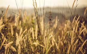 Picture Nature, Grass, Plant, Plants, Nature, Grass, Flora, Plants, Close-up, Flora, Plant, Petals, Growth, Growth, by …