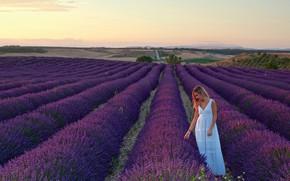 Picture field, girl, landscape, dress, blonde, in white, nature, lavender