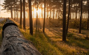 Picture forest, Portugal, the sun's rays