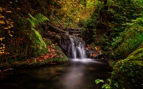 Picture autumn, forest, leaves, vegetation, waterfall