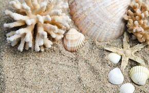 Picture sand, beach, nature, shell, starfish
