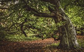 Picture autumn, nature, tree