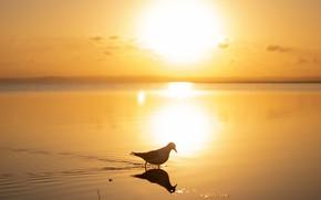 Picture sea, the sky, water, the sun, sunrise, dawn, bird, coast, Australia, Queensland, Wellington Point