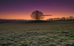 Picture frost, field, autumn, tree, glow