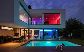 Picture puppy, housing, light colors, rooms