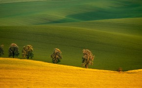 Picture trees, field, Czech Republic, Czech Republic, South Moravia, South Moravia