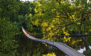 Picture summer, trees, bridge, river, Berezutski, Alexander