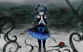 Picture girl, Sheya, Heterochromia
