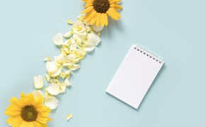 Picture sunflowers, background, blue, petals