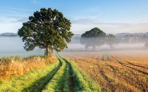 Picture grass, sky, trees, landscape, nature, mist, Field