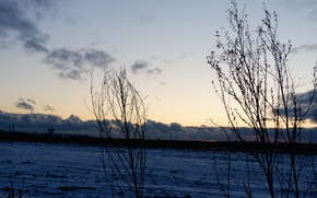 Picture winter, field, the sky, clouds, snow, sunset, earth, the evening, the dried plants