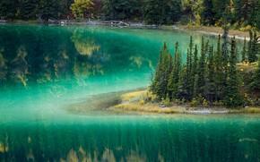 Picture trees, Canada, Yukon, lake emerald