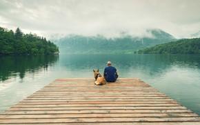 Picture peace, landscape, wood, dog, dock