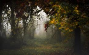 Picture autumn, nature, fog