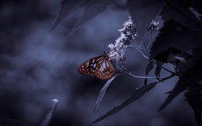 Picture leaves, the dark background, butterfly, treatment, twilight, brown, inflorescence, bokeh, purple background