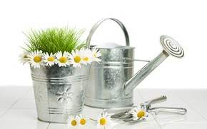 Picture grass, flowers, chamomile, bucket, white background, lake