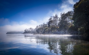 Picture trees, fog, river, couples