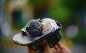 Picture hand, sleep, kids, baseball cap, in the hat, blurred background, crumbs, closed eyes, two kittens