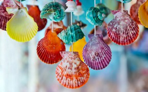 Picture colorful, shell, marine, seashells