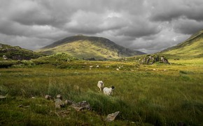 Picture sheep, pasture, mountains, hills