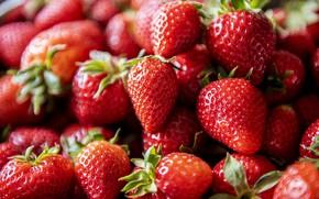 Picture macro, berries, strawberry, a lot, bokeh, Victoria