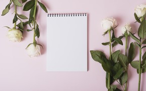 Picture background, pink, roses, Notepad, white, buds, pink, with, roses, backgroun