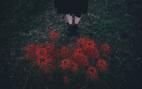 Picture grass, flowers, feet