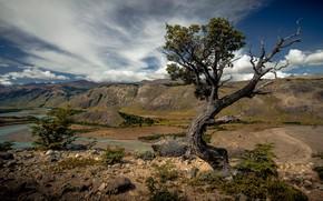 Picture landscape, mountains, nature, river, tree, landscape, beauty