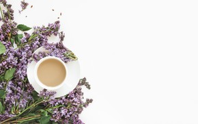 Picture white, flowers, background, Cup, lilac, composition