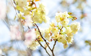 Picture light, flowers, branches, blur, spring, yellow, flowering, bokeh