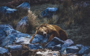Picture nature, stones, predator, brown bear