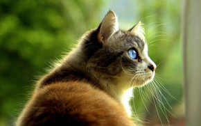 Picture blue eyes, in profile, spotted cat