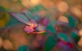 Picture branch, leaf, blur bokeh