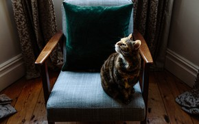 Picture cat, cat, look, room, chair
