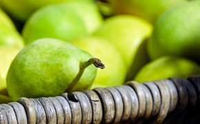 Picture macro, photo, pear