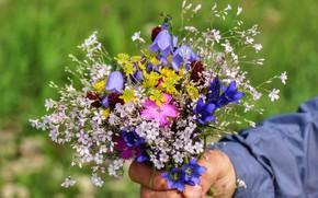 Picture summer, flowers, Bouquet