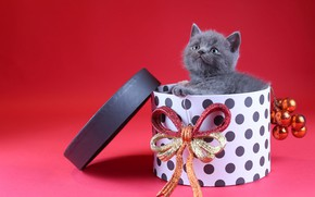 Picture cat, look, balls, decoration, kitty, grey, box, gift, toys, new year, Christmas, baby, kitty, bow, …
