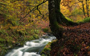 Picture autumn, forest, trees, stream, France, river, France, fallen leaves, Navarre, Navarre