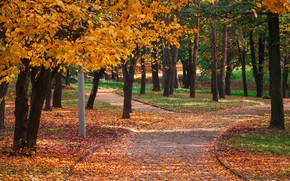 Picture autumn, leaves, trees, Park, colorful, nature, park, autumn, leaves, tree