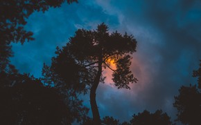 Picture forest, the sky, clouds, trees, sunset, clouds, nature, twilight
