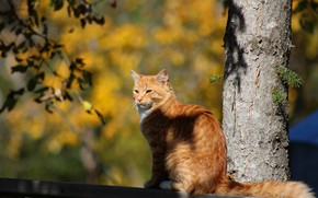 Picture autumn, cat, cat, light, tree, the fence, branch, red, sitting, bokeh