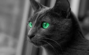Picture Cat, Wool, Kitten