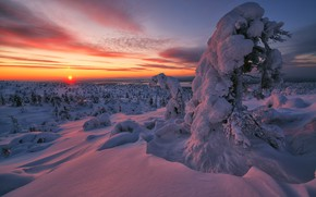 Picture winter, snow, trees, sunset, the snow, Russia, Murmansk oblast