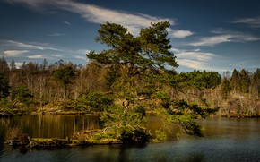 Picture autumn, forest, the sky, clouds, blue, tree, branch, shore, pond, pine, spreading