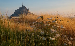 Picture field, summer, grass, flowers, castle, France, view, spikelets, meadow, architecture, Mont-Saint-Michel, Abbey, yarrow