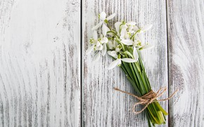 Picture flowers, bouquet, snowdrops, white, white, flowers, spring, snowdrops