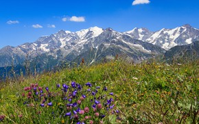 Picture flowers, mountains, tops, France, Savoie, Massif du Beaufortain