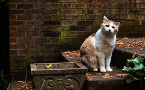 Picture cat, cat, look, wall, garden, sitting, spotted, red with white
