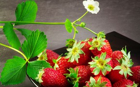 Picture leaves, flowers, strawberries, berry