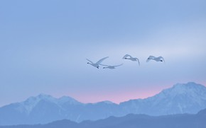 Picture winter, the sky, flight, mountains, birds, fog, dawn, the slopes, tops, height, pack, morning, haze, …